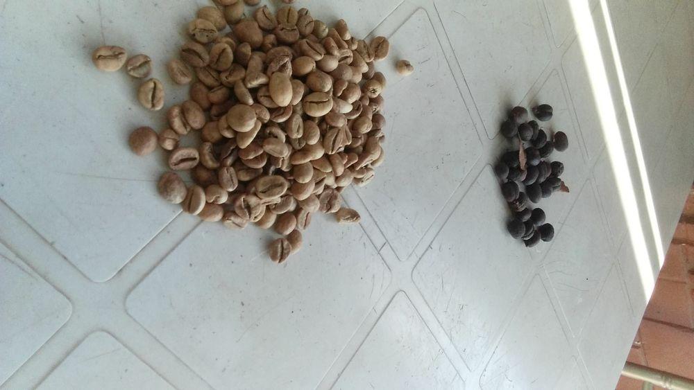 Café cascado e robusto
