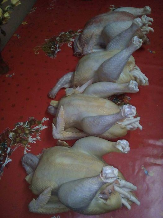 Vând pui și găini vii sau tăiate la comanda