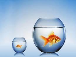 аквариум --подарок купить в Афалине.