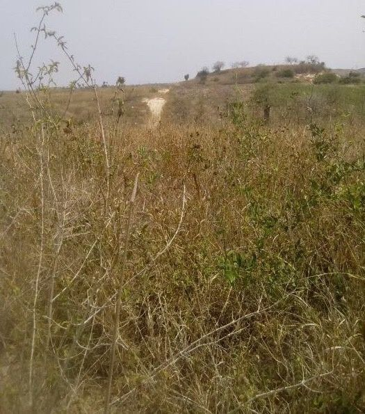Temos para venda, terreno de 05 hectares em Cacuaco, na Zona da Funda