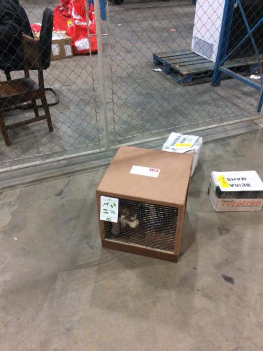 Caixa de transporte de cães Bairro do Jardim - imagem 1
