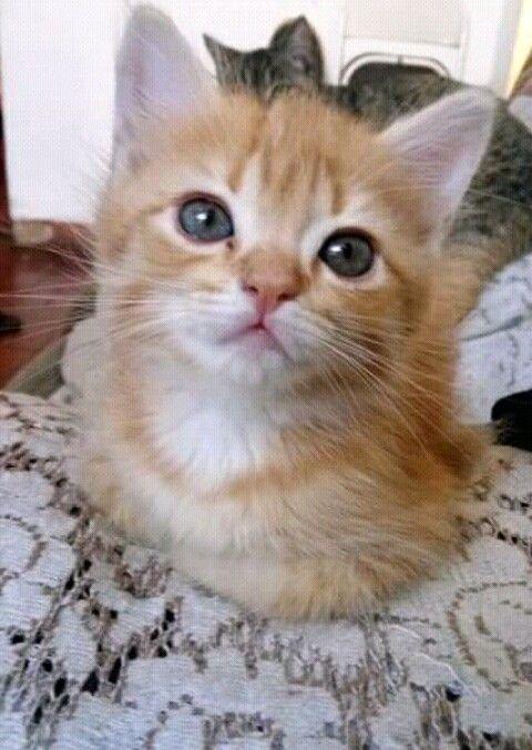 Tenho este linda gatinha