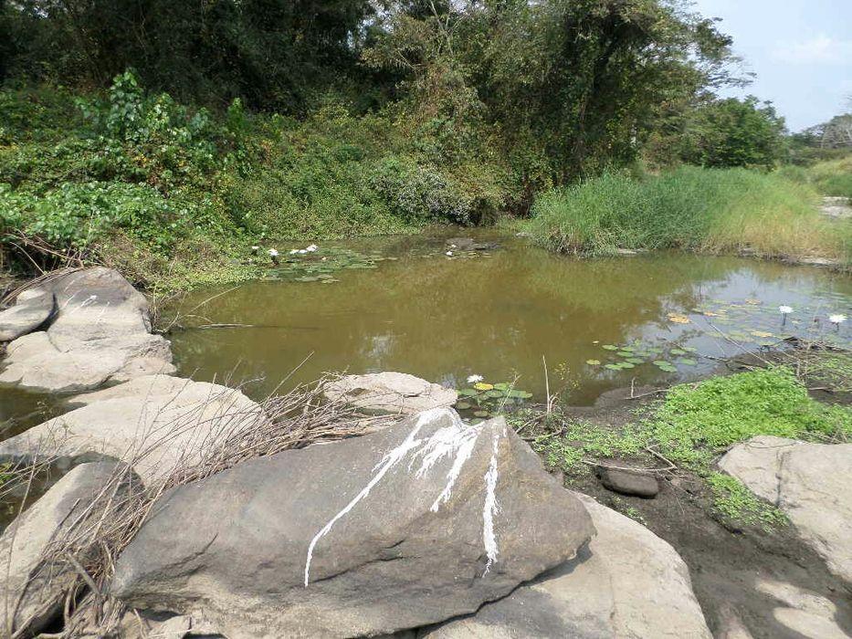 Vendo a minha fazenda de 1000 hectares com rio,terra super produtiva