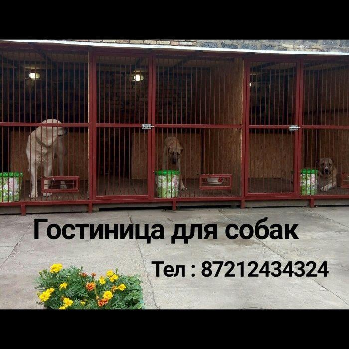 Гостиница-передержка для взрослых собак, 2.700тн/сутки
