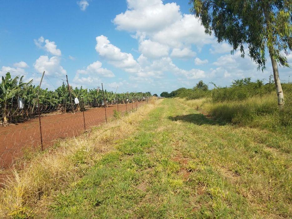 Transpasse 200 hectares em goba na berma da estrada