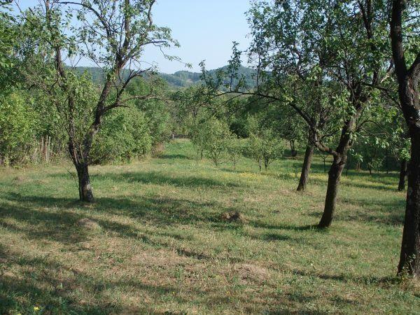 Vanzare  terenuri constructii Prahova, Provita de Sus  - 38000 EURO