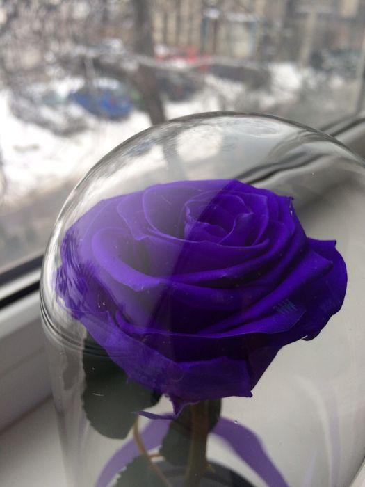 Cadou zile onomastice trandafir criogenat conservat Bucuresti - imagine 1