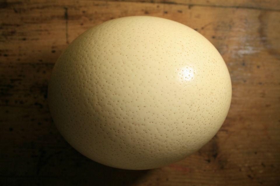 Oua De Strut Pentru Consum