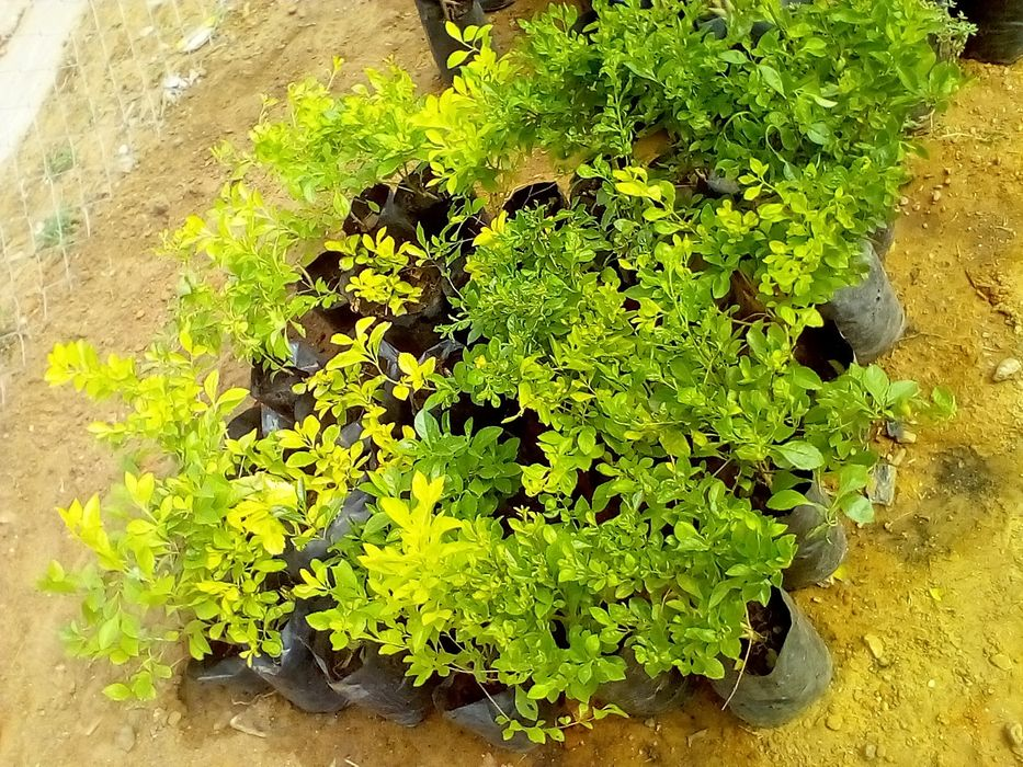 Encomendamos plantas