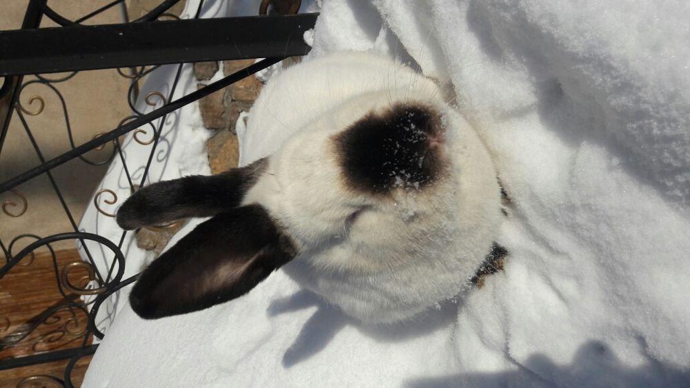 Продам кроликов породы Калифорния