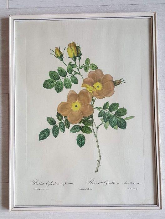 Set 2 buc printuri florale vintage Pierre-Joseph Redoute