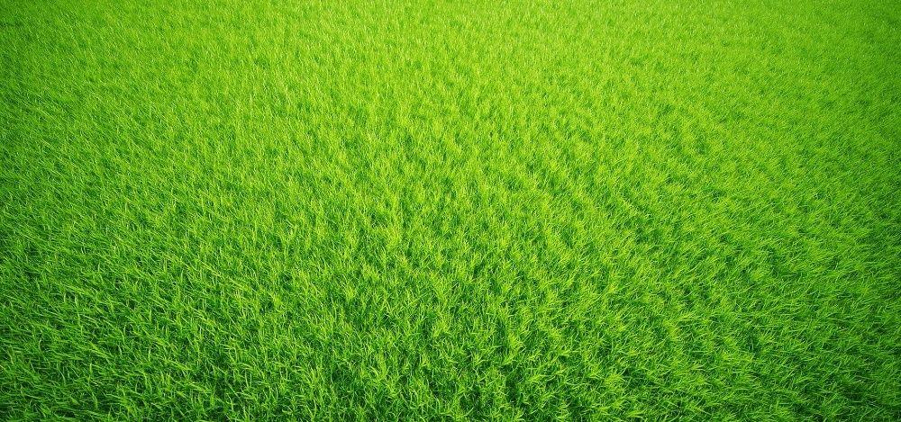 семена травы газон Астана
