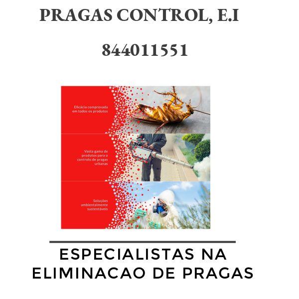 Controlo de pragas: a solucao que precisa para a sua casa ou empresa