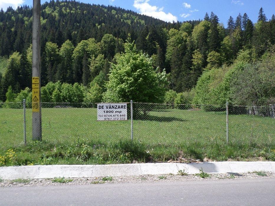 Teren 1880 m.p. la munte, Valea Tarcăului, Neamț, zonă superbă!