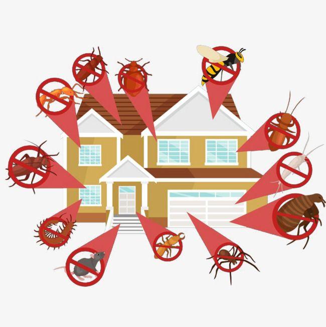 Controlo de Pragas e fumigação: PROTEJA A SUA RESIDENCIA DOS INSECTOS