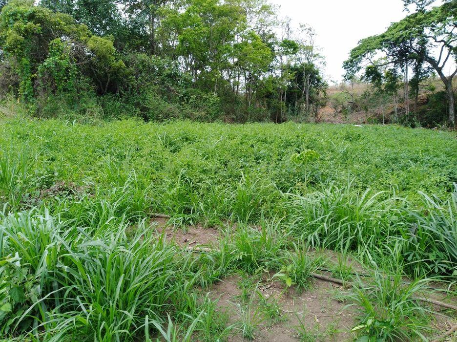Vende se está fazenda 370 hectares no Kwanza norte município da lucala