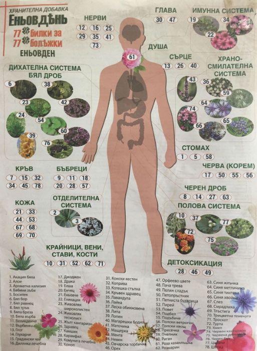 Билкови Смеси и БИЛКИ за всички болести с доставка за цяла България
