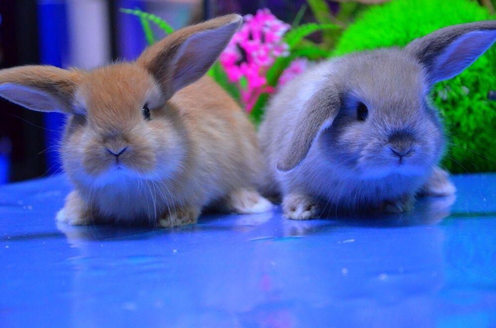 """Кролики карликовые в """"Живом Уголке"""" в Таугуле"""