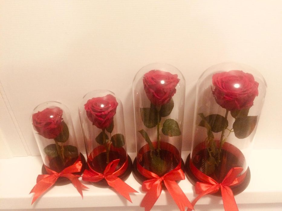 Criogenati Valentine's Day