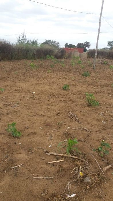 Vende-se terreno no bairro Muhalaze na paragem das baracas.