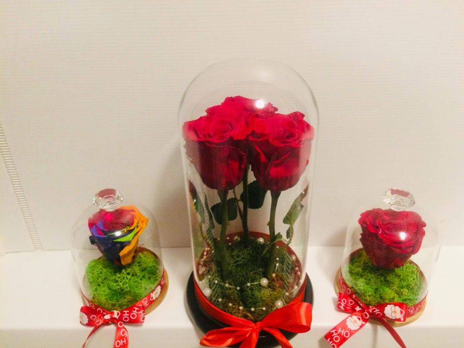 Mini cupole trandafiri criogenati