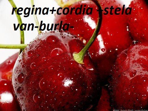 Pomi fructiferi-altoiti