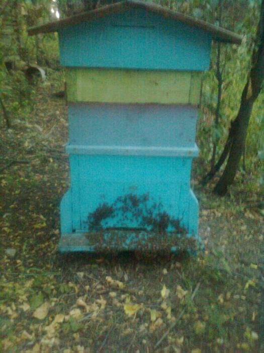 Домашен пчелен мед-просто истински