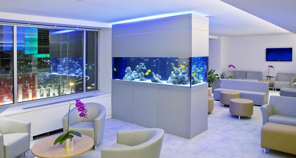 Mentenanta acvariu marin - amenajare - intretinere acvarii
