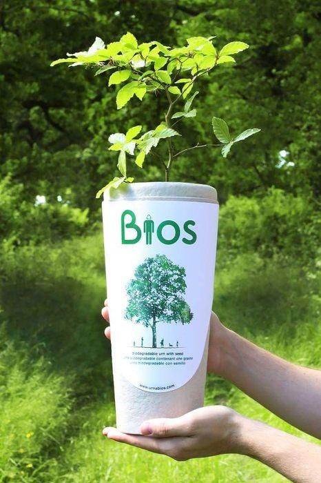 Vand afacere la cheie cu urne biodegradabile!