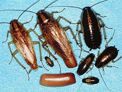 Тараканы клопы мыши