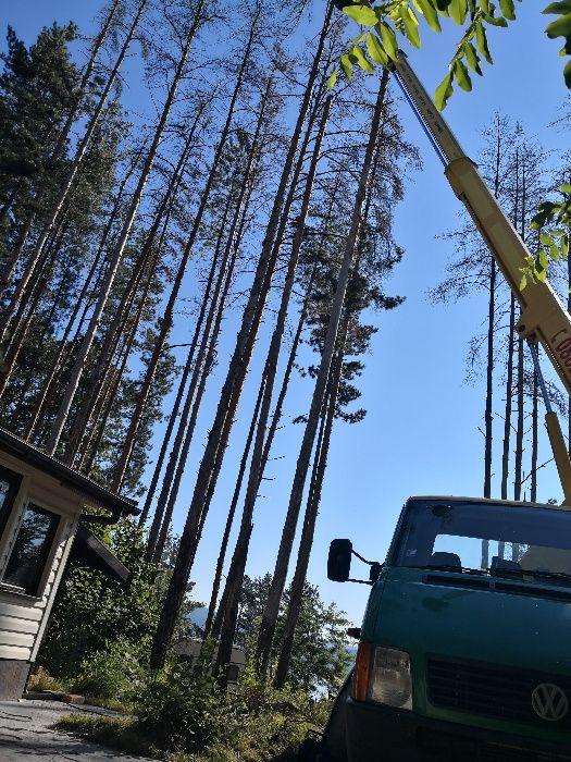 Автовишка под наем!Рязане и кастрене на опасни дървета