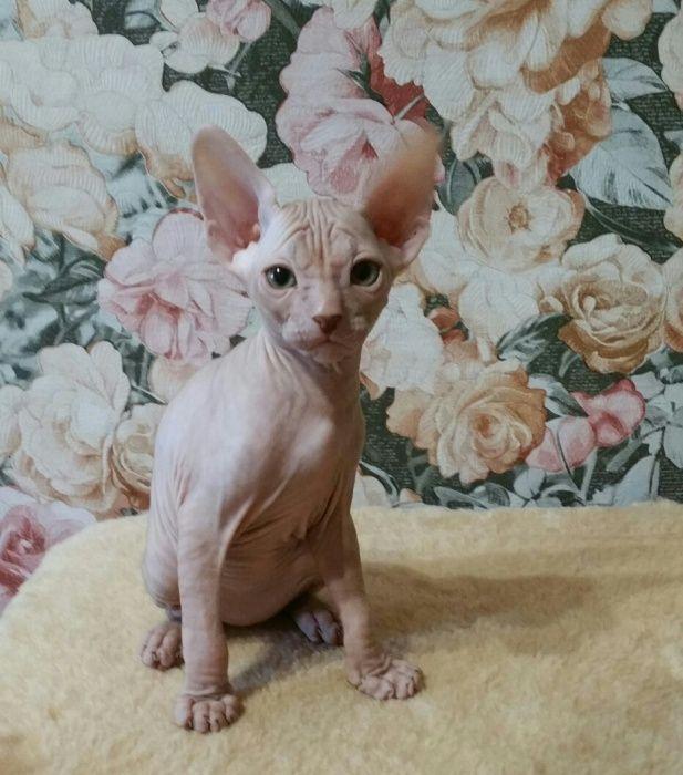 Шикарный котик