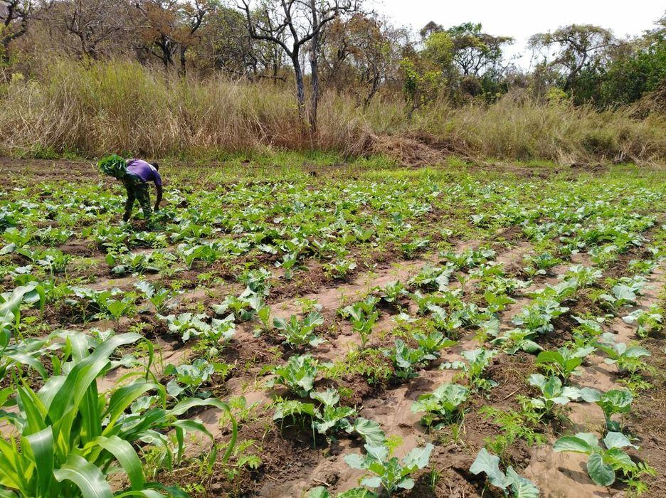 Vende se está fazenda de 370 hectares no Kwanza norte município da LC