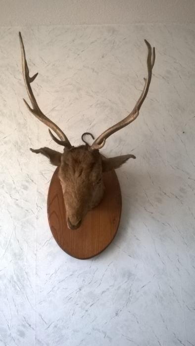 Продавам еленови рога