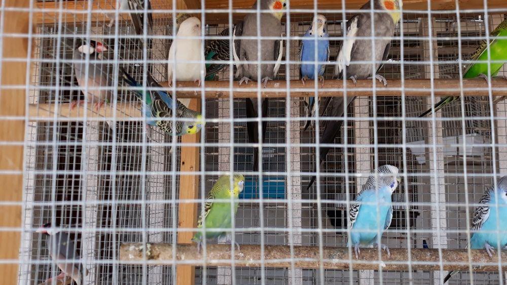 Venda de aves exóticas e assessorios ( ninhos e gaiolas )