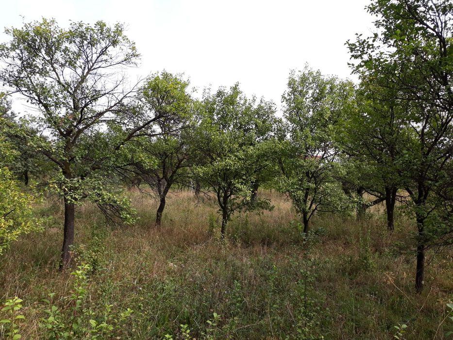 Vanzare  terenuri constructii Maramures, Baia Sprie  - 105000 EURO