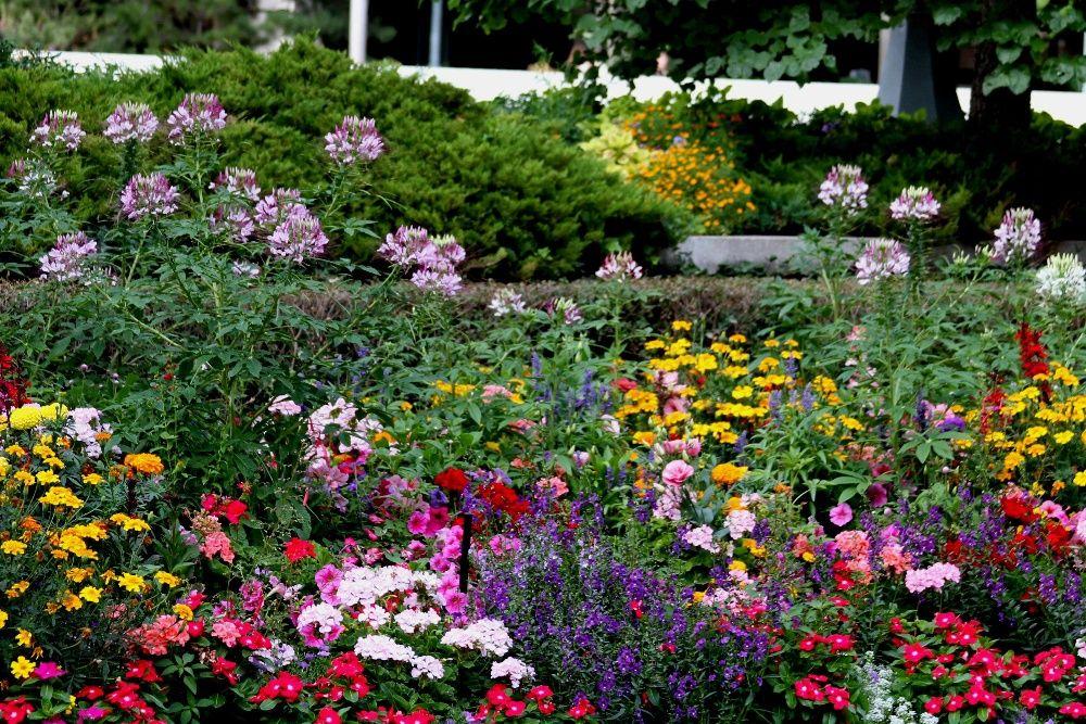 100 seminte tot felul de flori + de zorele (reducere de 50lei!)