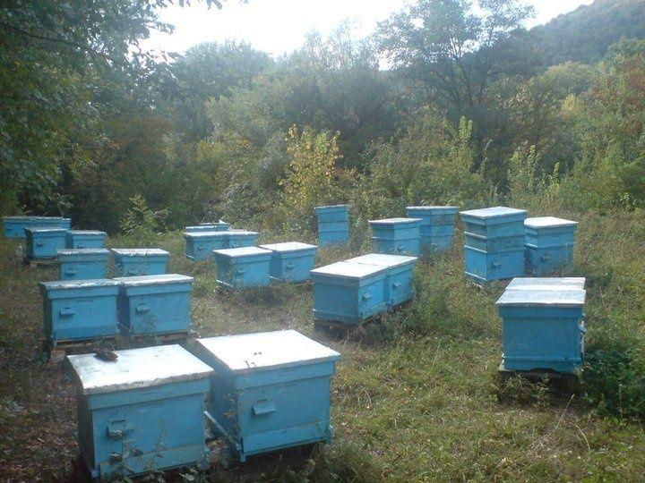 Пчелни майки и отводки от регистриран биологичен производител гр. Шумен - image 2