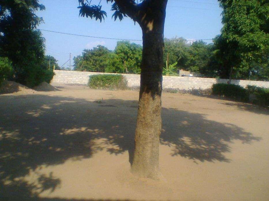 TSALALA-Zona localizada, agua,luz,escola,hospital,estrada,15/30PARCLDO Machava - imagem 7