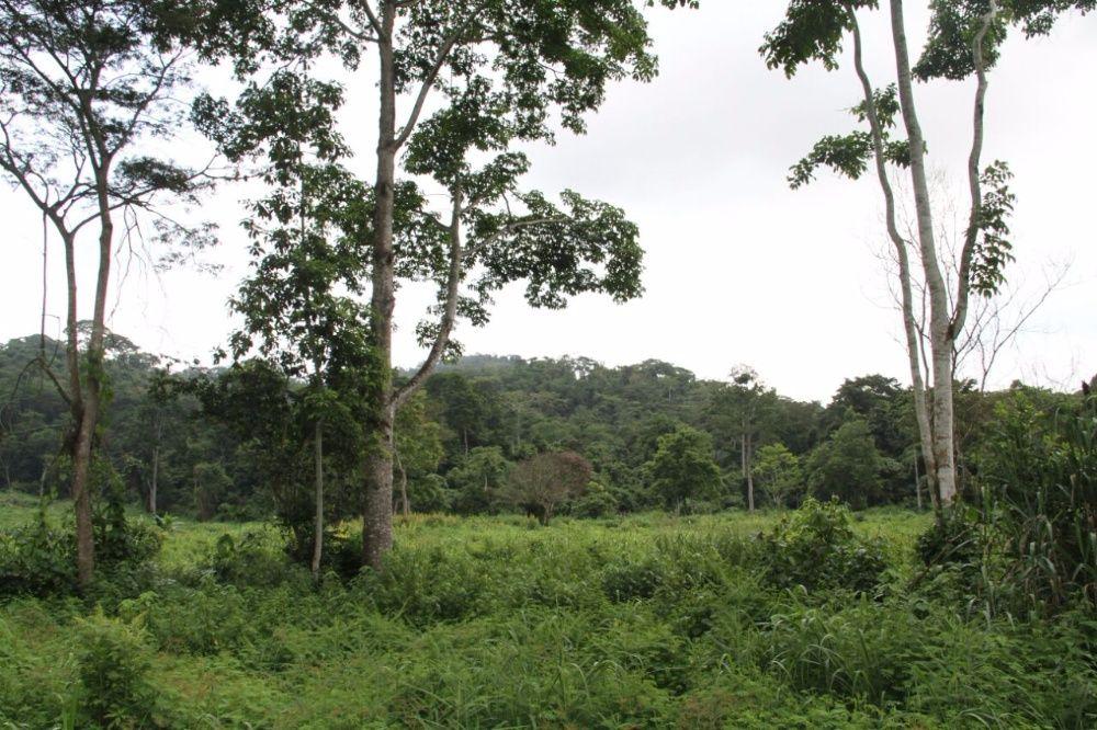 Magnifica Fazenda Bengo 1.490 hectares 80 km Luanda