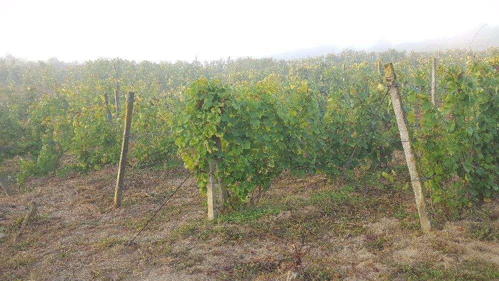 Vanzare  terenuri agricol Bistrita Nasaud, Lechinta  - 5294 EURO