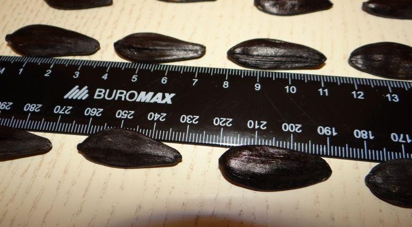 Семена подсолнечника кондитерского Канада
