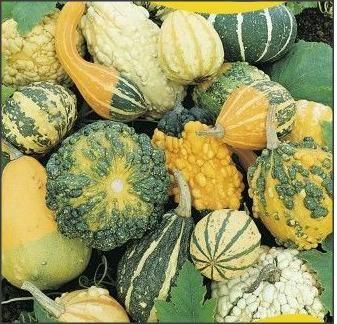 Seminte de Dovleac decorativ fructe mici/ 15sem=10lei