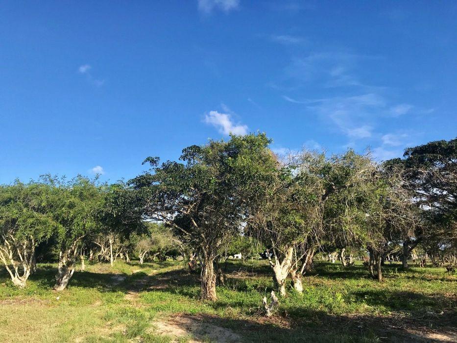 Macaneta River Frontage Property/490hectares Marracuene - imagem 3