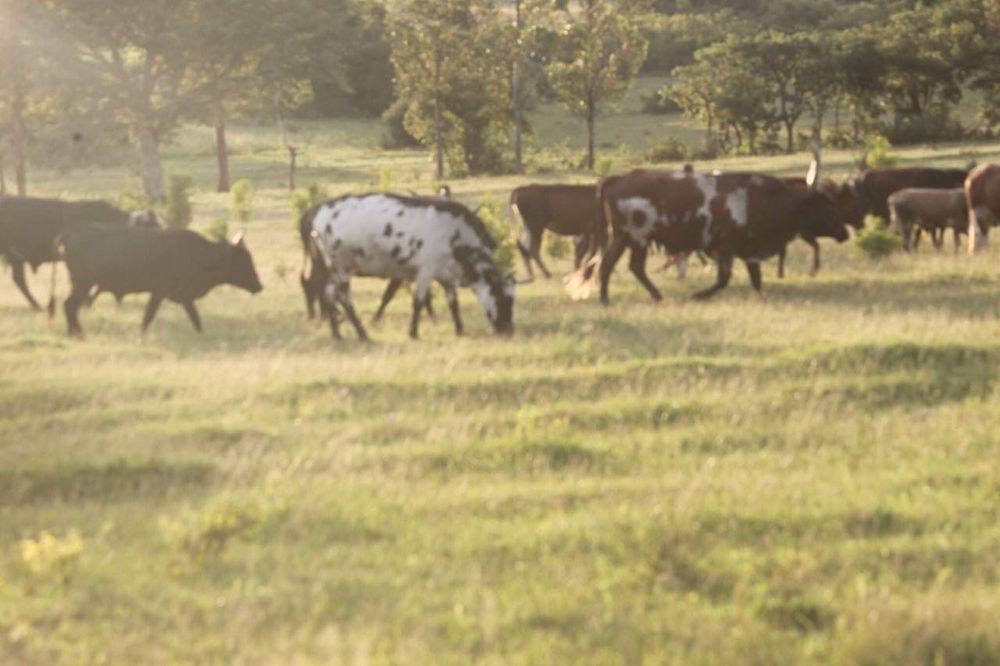 Vende se esta grande fazenda em lubango