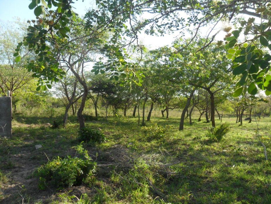 vende- se quinta com 9hectares/com duat em Mahoche-moamba Cidade de Matola - imagem 7