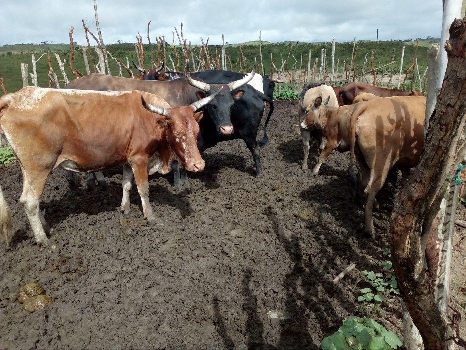 Vende-se uma fazenda de 200 ha bem localizado com gados