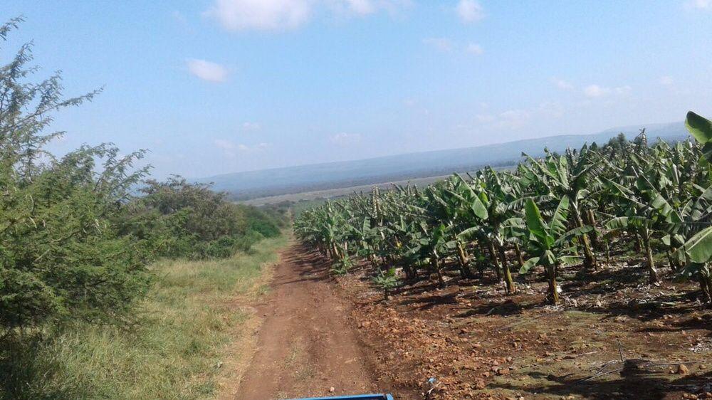 Vende se 34 hectares perto do pequenos libombos Pr agricultura