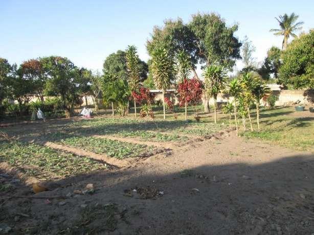 Dona Alice 30\50 atras do Kalunga. Maputo - imagem 2