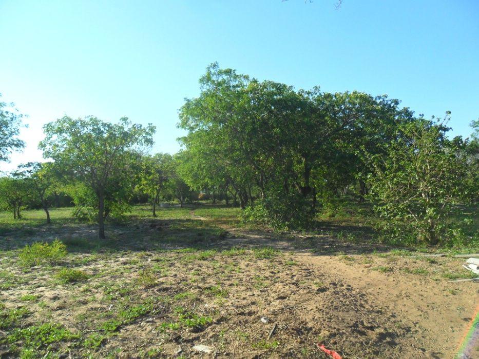 vende- se quinta com 9hectares/com duat em Mahoche-moamba Cidade de Matola - imagem 8